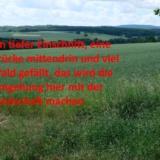 08_Schlappmühler_Pfad_Richtung_Forsthaus